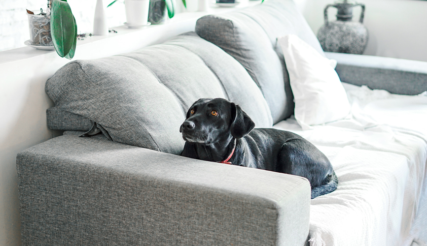 dog on couch with couch cover
