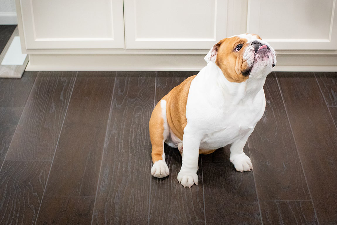Best Flooring for Dog Owners