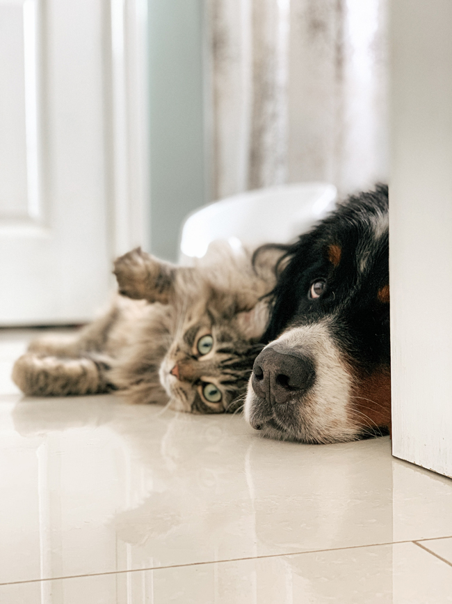 dog and cat on tile